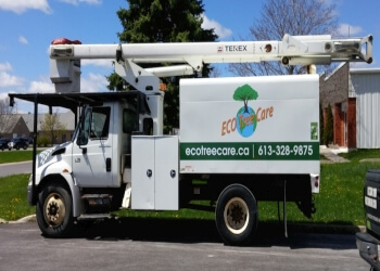 Kingston tree service Eco Tree Care