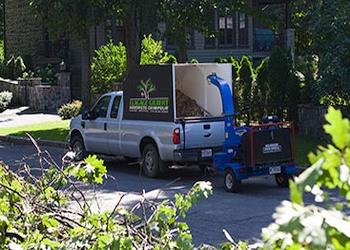 Quebec tree service Elagage Gilbert