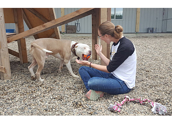 Grande Prairie dog trainer  Elevation Dogs