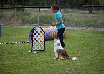 Kamloops dog trainer Five Star Dog Training