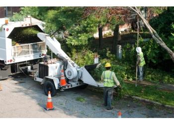 Richmond Hill tree service Five Star Tree Services Inc.