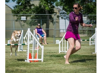 Medicine Hat dog trainer Flashing Canines Agility Club