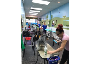 Richmond Hill pet grooming Fluffy' Spa