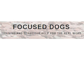 Fredericton dog trainer Focused Dogs