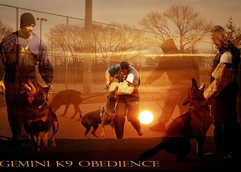 Toronto dog trainer Gemini K9 Obedience Inc.