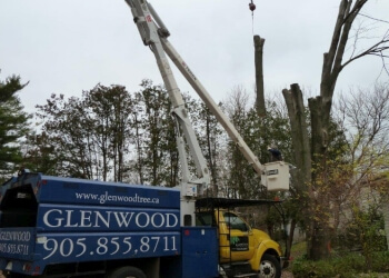 Mississauga tree service Glenwood Tree Service Inc.