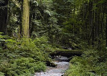 Victoria hiking trail Goldstream Provincial Park Trail