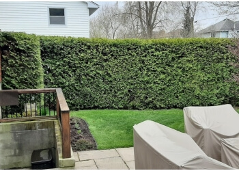 Sarnia tree service Guardian Tree Systems