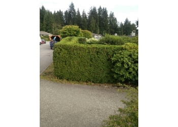 North Vancouver tree service Hoff Tree Services
