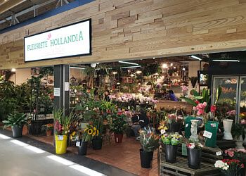 Dollard des Ormeaux florist Hollandia Florists