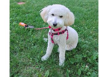 Medicine Hat pet grooming Jaws 'N' Paws