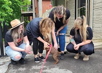 London dog walker Jeve's Pet Care Inc.