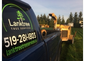 Stratford tree service Lanktree Tree Services