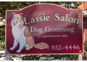 Moncton pet grooming Lassie Salon