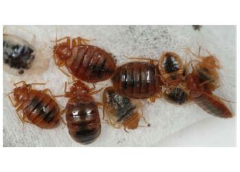 Sherbrooke pest control L'exterminateur