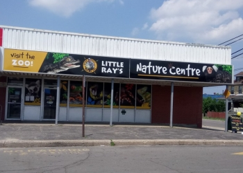 Hamilton places to see Little Ray's Nature Centres
