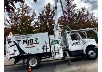 Nanaimo tree service MJR Tree Service