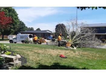 Brantford tree service M & M Tree Service