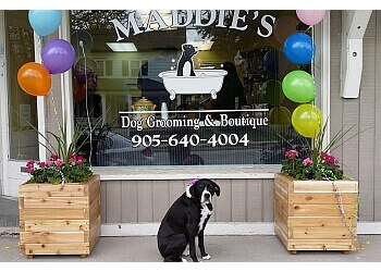 Stouffville pet grooming Maddie's Dog Grooming & Boutique