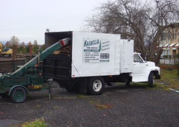 Richmond tree service  Magnolia Tree Service & Landscaping