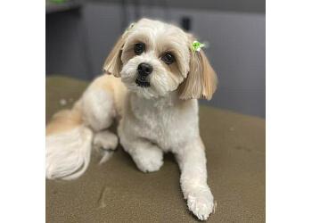 Langley pet grooming Markeydas Pet Grooming