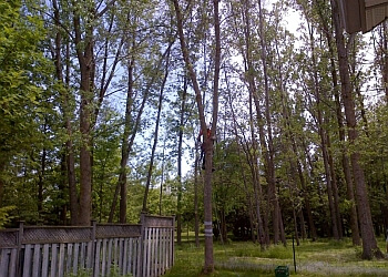 Waterloo tree service Mason Tree Services