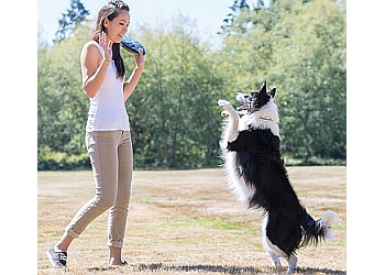 Langley dog trainer Modern Canine Training