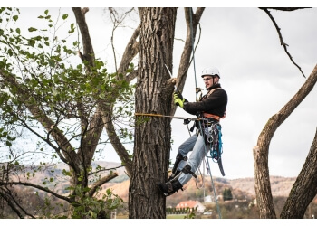 Vaughan tree service Mr Tree Care