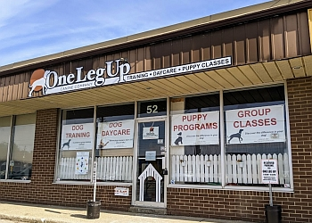 Guelph dog trainer One Leg Up Canine Company