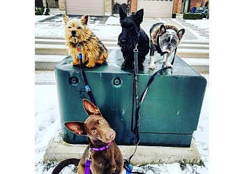 London dog walker Paisley's Pooches Plus