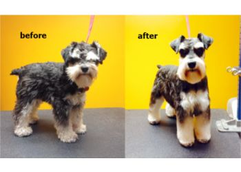 North Bay pet grooming Pawcasso Pet Salon