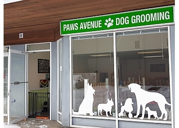 Langley pet grooming   Paws Avenue Dog Grooming