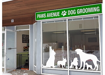 Langley pet grooming   Paws Avenue Dog Grooming Spa Ltd.