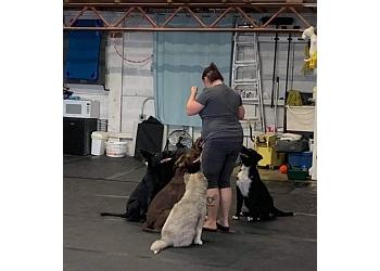 Lethbridge dog trainer Paws On Training