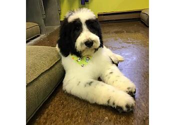 Ajax pet grooming Pawsh Pet Grooming
