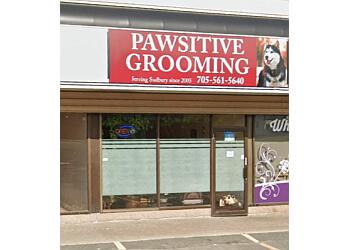 Sudbury pet grooming Pawsitive Grooming