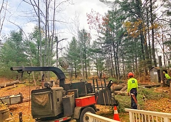 3 Best Tree Services In North Bay On Expert Recommendations