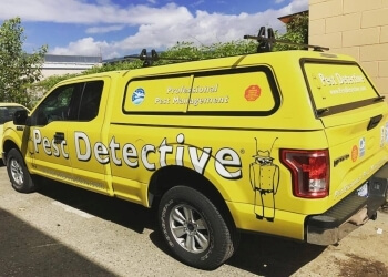 North Vancouver pest control Pest Detective