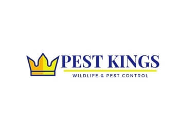 Barrie animal removal Pest Kings Wildlife & Pest Control Barrie