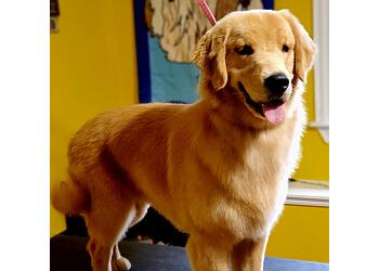 Fredericton pet grooming Petagree Dog Grooming