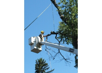 Niagara Falls tree service Pineridge Tree Service