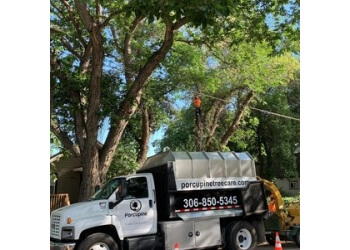 Saskatoon tree service Porcupine Tree Care
