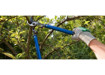 Vaughan tree service Powell Tree Services