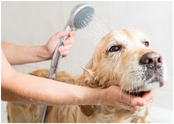 Halton Hills pet grooming Pretty Pet The