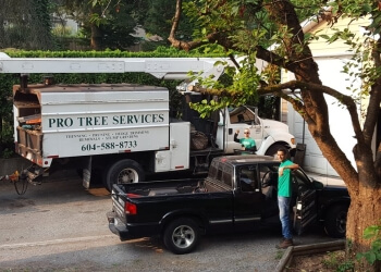 Surrey tree service Pro Tree Services