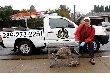 Niagara Falls pest control Pro Wildlife Niagara
