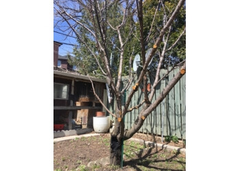 Toronto tree service Professional Tree Services