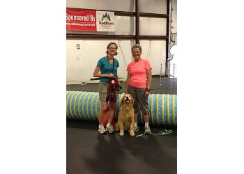 North Bay dog trainer Pure Gold Dog Sport
