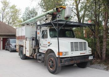 Halton Hills tree service Quality Tree Service