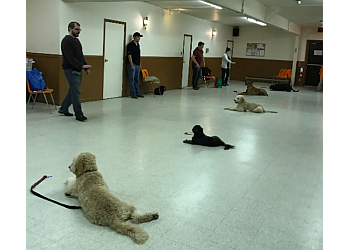 Belleville dog trainer  Quinte Canine